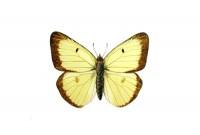 http://abbeyryan.com/files/gimgs/th-43_43_02wcbutterfly500.jpg