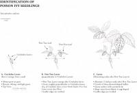 http://abbeyryan.com/files/gimgs/th-43_43_botanicalplate5.jpg