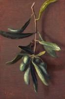 http://abbeyryan.com/files/gimgs/th-56_abbeyryan-2017-greece-6x4-olive-branch-patmos.jpg