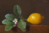 http://abbeyryan.com/files/gimgs/th-56_abbeyryan-2017-lemon-with-leaves-flower-bud4x6.jpg