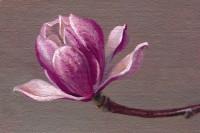 http://abbeyryan.com/files/gimgs/th-56_abbeyryan-2018-magnolia-flower-no-1.jpg